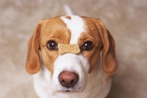 ボーダーコリーのミックス犬、ボーダーラブ、ボーダーバセット、シバボーダーなど人気画像まとめpart1