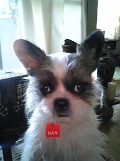 ミックス犬ナン