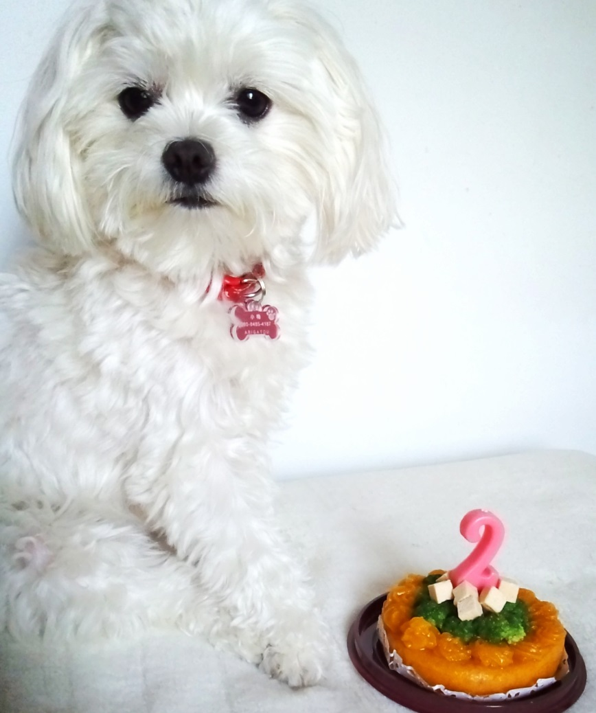 犬おやつケーキ通販
