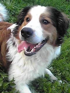 ミックス犬ビッキー