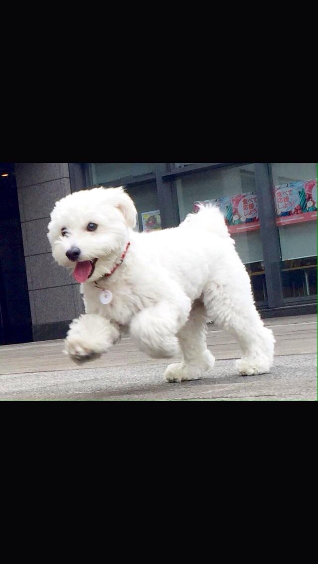 ミックス犬チワプーカン太